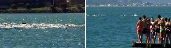 Setka delfinów popisywała się pod samą plażą