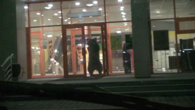 Niedźwiedź wszedł do centrum handlowego. Zastrzelono go